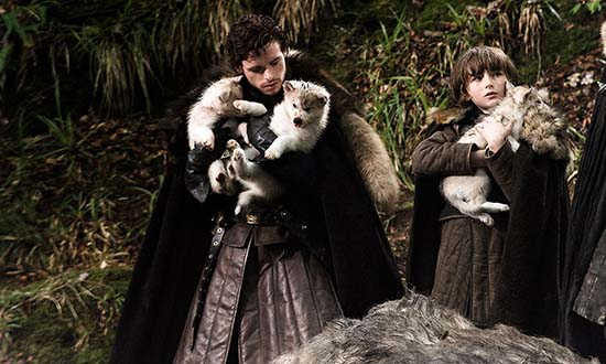 starks game of thrones direwolves